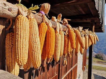 Corn, Vegetables, Healthy, Ornament, Contadiono