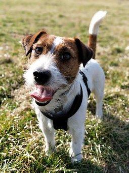 Dog, Animal, Cute, Happy, Fun, Dogs, Adorable, Playful