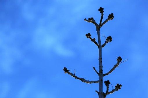 Branch, Bud, Spring, Nature, Tree, Flower, Plant, Sky