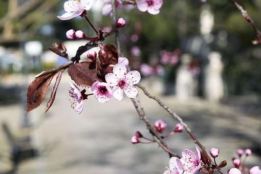 Fiori Di Pesco, Spring, Nature, Rosa, Sky, Ielix