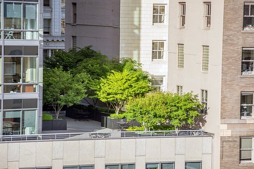 Trees, Terrace, City, Oasis, Green, Sustainability