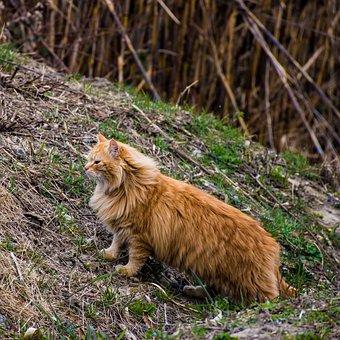Cat, Feline, Feral, Animal, Domestic, Wild, Housecat