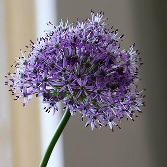 Flowers, Flower, Bloom, Garden, Flora, Spring, Purple