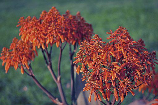 Plant, Flowers, Garden, Nature, Botany, Blooming, Flora