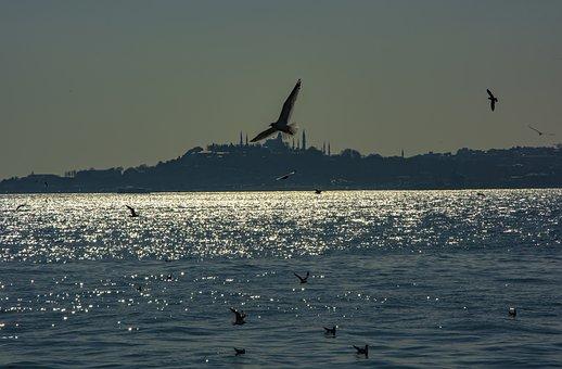 Istanbul, Marine, Sky, Turkey, Blue, Nature, Landscape