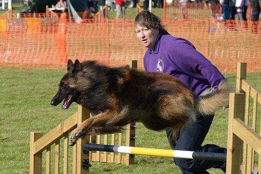 Belgian Shepherd Dog, Handler, Agility, Fitness, Jump