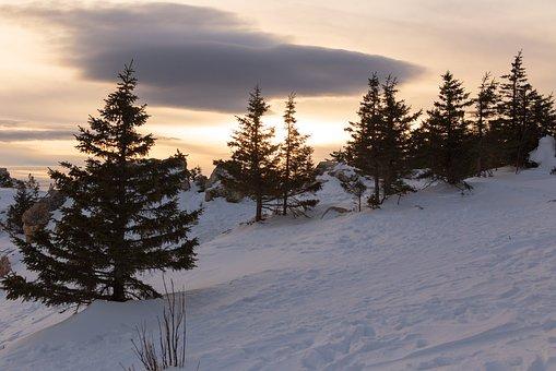 Sunset, Mountain, Snow, Spruce, Nature, Mountains