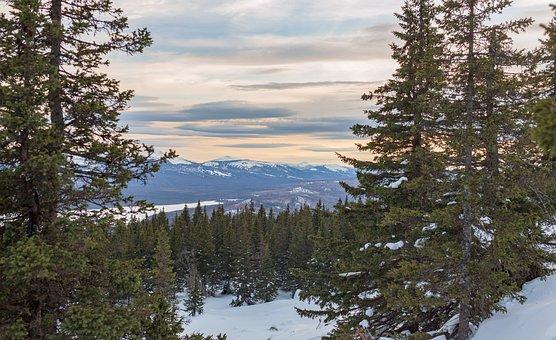 Mountains, Nature, Winter, Snow, Spruce, Landscape