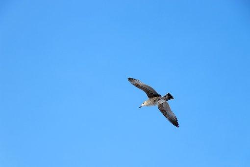 Sky, Background, Bird, Flight, Blue, Net, Blank, Color