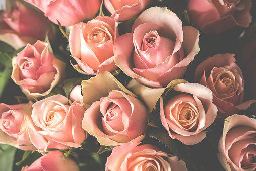 Roses, Bouquet, Blo, Flowers, Birthday, Pink, Love