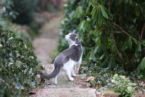 Cat, Free Float, Nature, Psychiatric, Domestic Cat