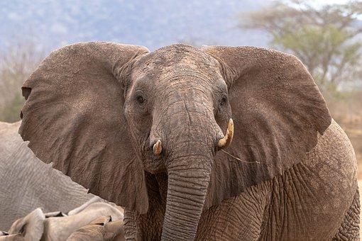 Africa, Kenya, Tsavo West, Safari, Nature, Animal World