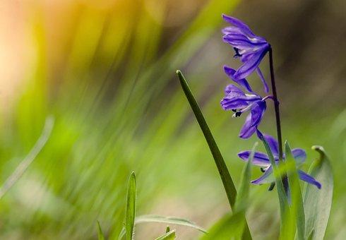 Spring Flowers, Blue, Ringtones, Colorful, Meadow