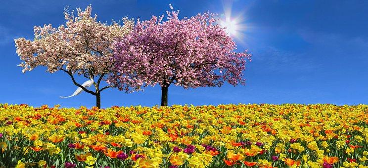 Nature, Landscape, Emotions, Spring, Flowers, Tulips