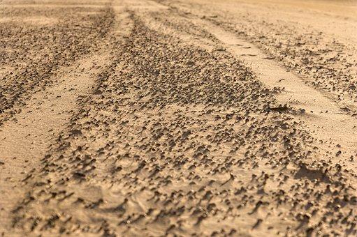 Trace, Sand, Tire Tracks, Sea, Sand Beach, Coast, Wind