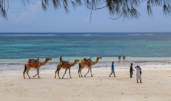 Africa, Kenya, Diani Beach, Camels, Beach