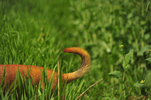 Tail, Green, Nature, Grass, Dog, Freedom, Race