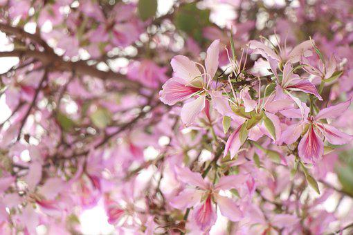 Background, Pink, Flowers, Almonds