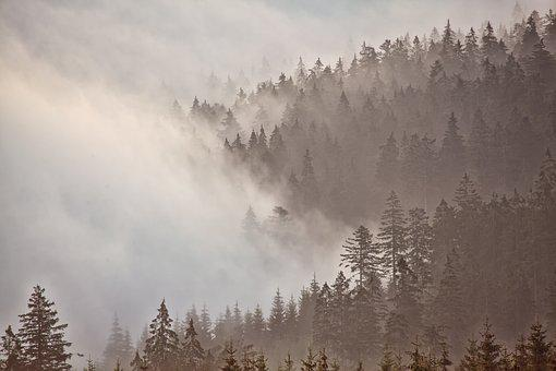 Morgenstimmung, Forest, Fog, Mountains, Mystical