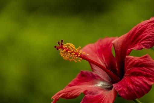 Nature, Flower, Bella, Plant, Garden