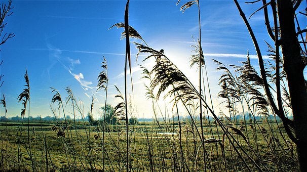 Wind, Morning, Sunrise, Frozen, Cold, Reed, Stems