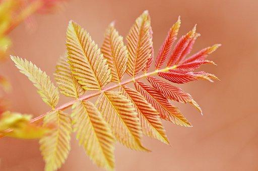Twig, Leaf, Foliage, Vein, Pattern, Shape, Shoot