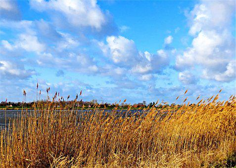 Landscape, River, Bank, Grasses, Reed, Brown, Dry