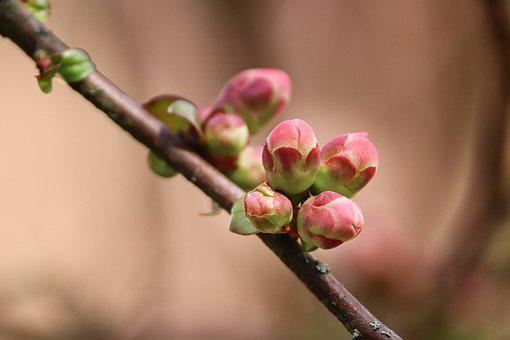 Bud, Branch, Go Up, Drive, Spring, Sprout, Flowers