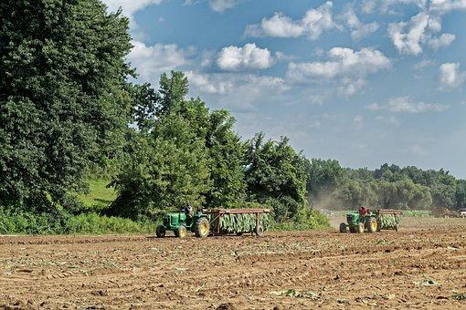 Tobacco, Harvest, Tractors, Laborers
