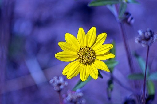Yellow Flower From String Lake, Nature, Flower