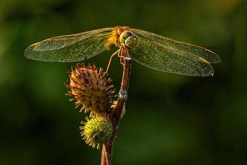 Hopper, Insects, Wonderful, Green, Bangladesh, Natural