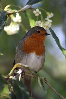 Birds, Owls, Eagle, Owl, Bird, Nature, Predator, Pity