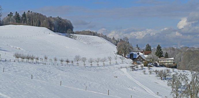 Landscape, Switzerland, Winter, Sun, Clouds, Trees