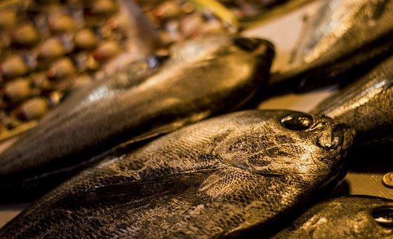 Shell, Fish, Seafood, Ocean, Sea, Seashell, Food, Crab