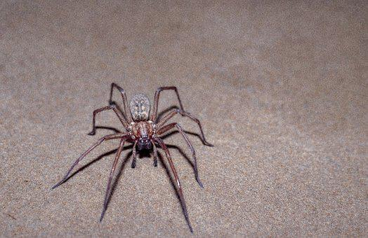 Spider, Scary, Insect, Nature, Creepy, Horror, Hairy