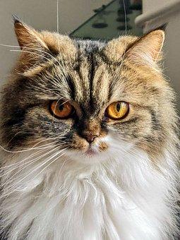 Cat, Feline, Eyes, Cats, Adorable, Cute, Pleasure