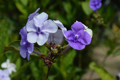 Flowers, Nature, Spring, Summer, Plant, Garden, Petals