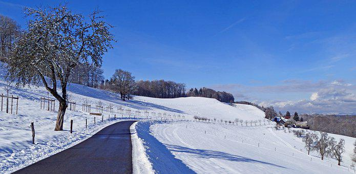 Landscape, Switzerland, Winter, Snow, Sun, Tree, Fences