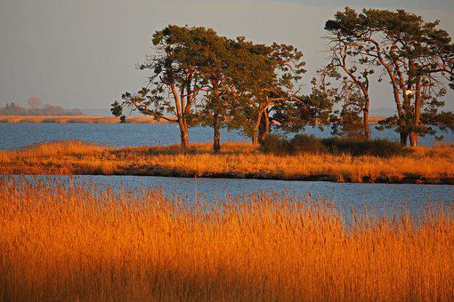 Gristow, Nature Reserve, Landscape, Grass, Rest