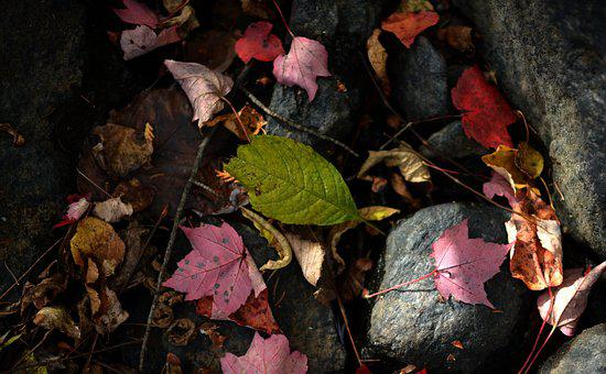 Leaf, Leaves, Autumn, Red, Colour, Season, Stream