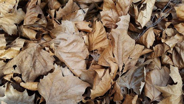Leaves, Autumn, Forest, Fall, Nature, Tree, Leaf, Mood