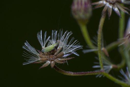 Bug, Macro, Insect, Nature, Fly, Bee, Wildlife, Animal