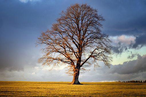 Tree, Winter, Landscape, Nature, Field, Cloud, Sky