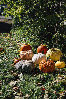 Pumpkins, Fall, Pumpkin, Autumn, Orange, Jack O Lantern