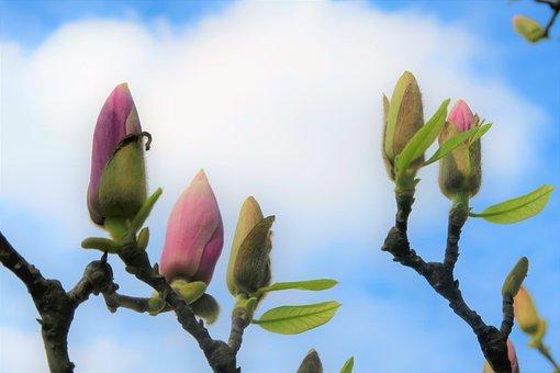 Bud, Flower, Spring, Nature, Plant, Color