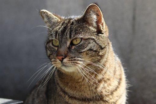 Cat, Feline, Look, Cute, Fur, Portrait, Animals