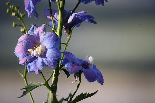 Flowers, Purple, Garden, Nature, Mountains, Landscape