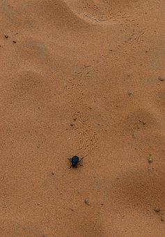 Scarab, Beetle, Desert, Sand, Animal, Traces