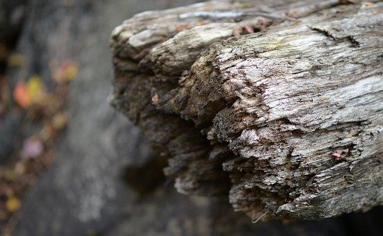 Wood, Timber, Decay, Autumn, Colour, Season, Stream