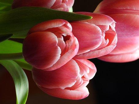 Tulips, Flowers, Spring, Flower, Bouquet, Garden